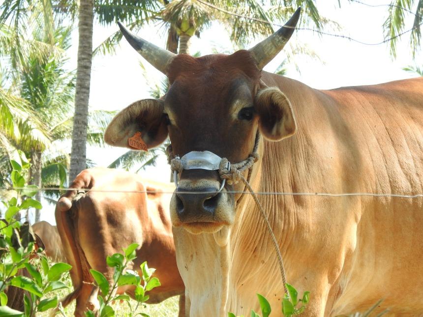 DSCN8068農業