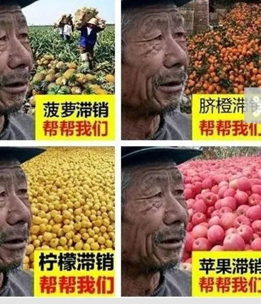 532394農業